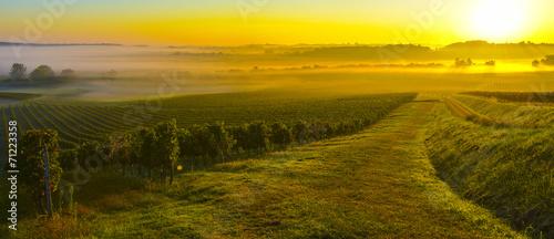 Vineyard Sunrise - 71223358