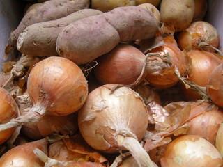 양파와 고구마: Sweet potato and onion