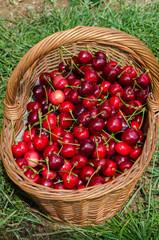 cestino di ciliegie rosse e mature