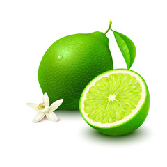 Lime with half and flower on white background