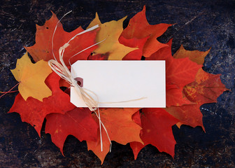Blank cream tag on top of colorful maple leaves