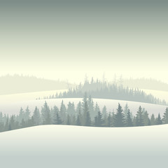 Winter coniferous forest in the morning.