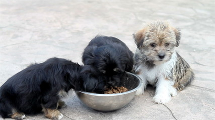 Puppies eating from the bowl outside