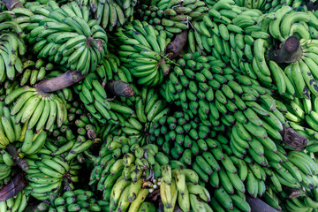 banana group