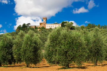 View of Magona castle from an olive grove, Grosseto Italy