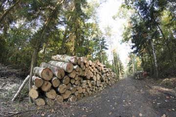 Skład drzewa w lesie