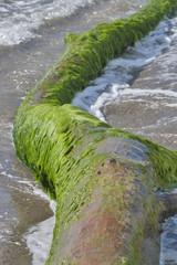 Dead tree trunk on a beach
