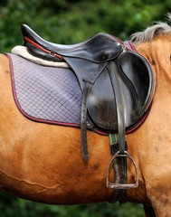 Close up of horse saddle.