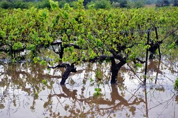 Flood vines