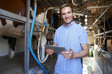 Dairy Farmer Using Digital Tablet In Milking Shed