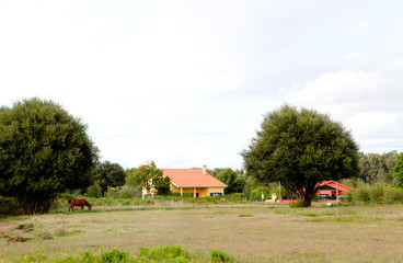 Country landscape with a horse and houses