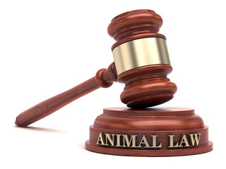 Animal law & Gavel