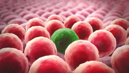 ell division, Cells