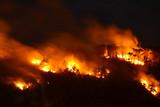 Incendio nella foresta