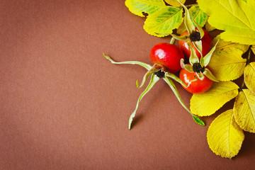 rosehip fruit