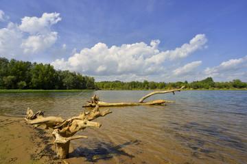 Nature morte sur le lac