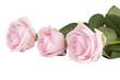 Obrazy na płótnie, fototapety, zdjęcia, fotoobrazy drukowane : flowers roses