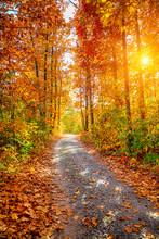 "Постер, картина, фотообои ""Autumn forest"""