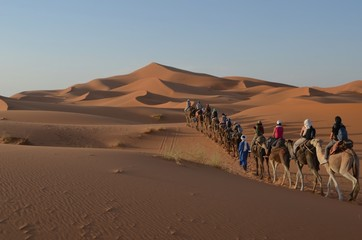 Dune deserto carovana cammelli Marocco - Camels Morocco