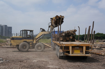 Loading timer on flatbed truck in timber yard