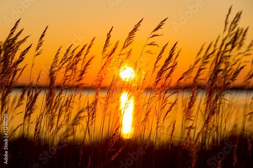 Reed against a colourful decline - 71248750