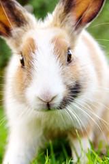 close-up of cute bunny rabbit