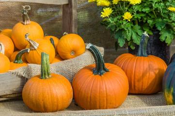 Pumpkin display at a fall festival