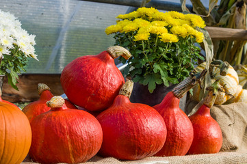 Red squash on display at a fall festival