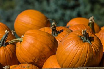 Orange halloween pumpkins on display