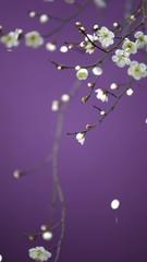 紫の世界に桜吹雪2