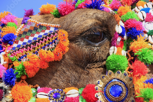 Staande foto Kameel Portrait of decorated camel at Desert Festival, Jaisalmer, India