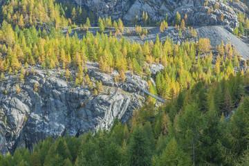 Landschaft mit Arvenbäumen ob Zermatt