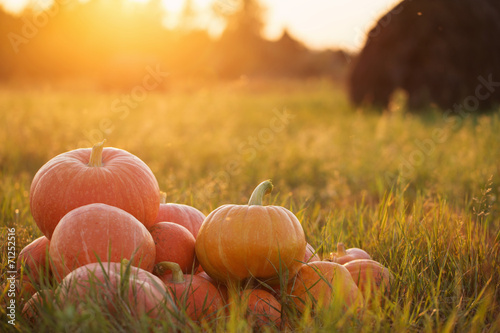 pumpkins outdoor poster