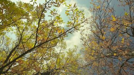 Autumn leaf and sunshine