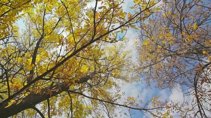 Autumn leaf on the tree