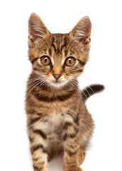 Beautiful little kitten