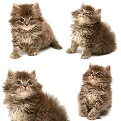 Collection of a beautiful persian cat