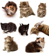 Collection of playful kittens