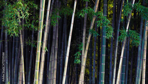 Poster Bamboe Bamboo jungle - tropical forest.