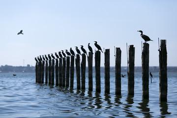 Birds sitting on pylons