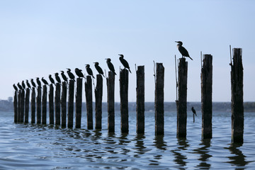 Birds sitting on pylons