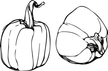 pumpkin on white backgroundp