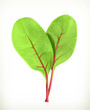 Baby beetroot leaves, vector illustration
