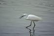 white water bird catching fish in river