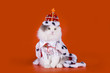 cat in the clothes of the king on a red background
