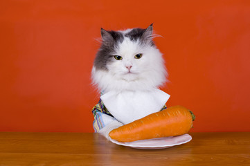Unhappy with the cat dines carrots
