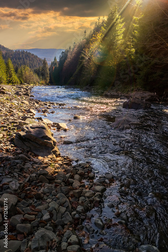 forest river with stones and moss at sunset