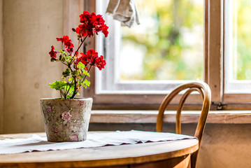 Flower in a pot on a rustic wooden table