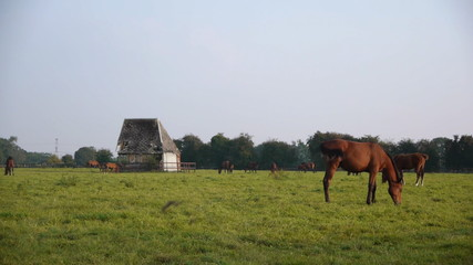 Horses and a frame house barn in Normandy, France