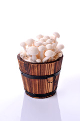 Bunch of white bunapi beech mushroom